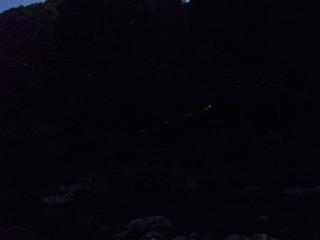 高野山のホタル