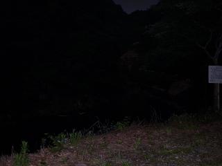 高野山の帰りのホタル