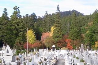 英霊殿のモミジ・紅葉が見頃です