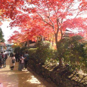 高野山の紅葉2018